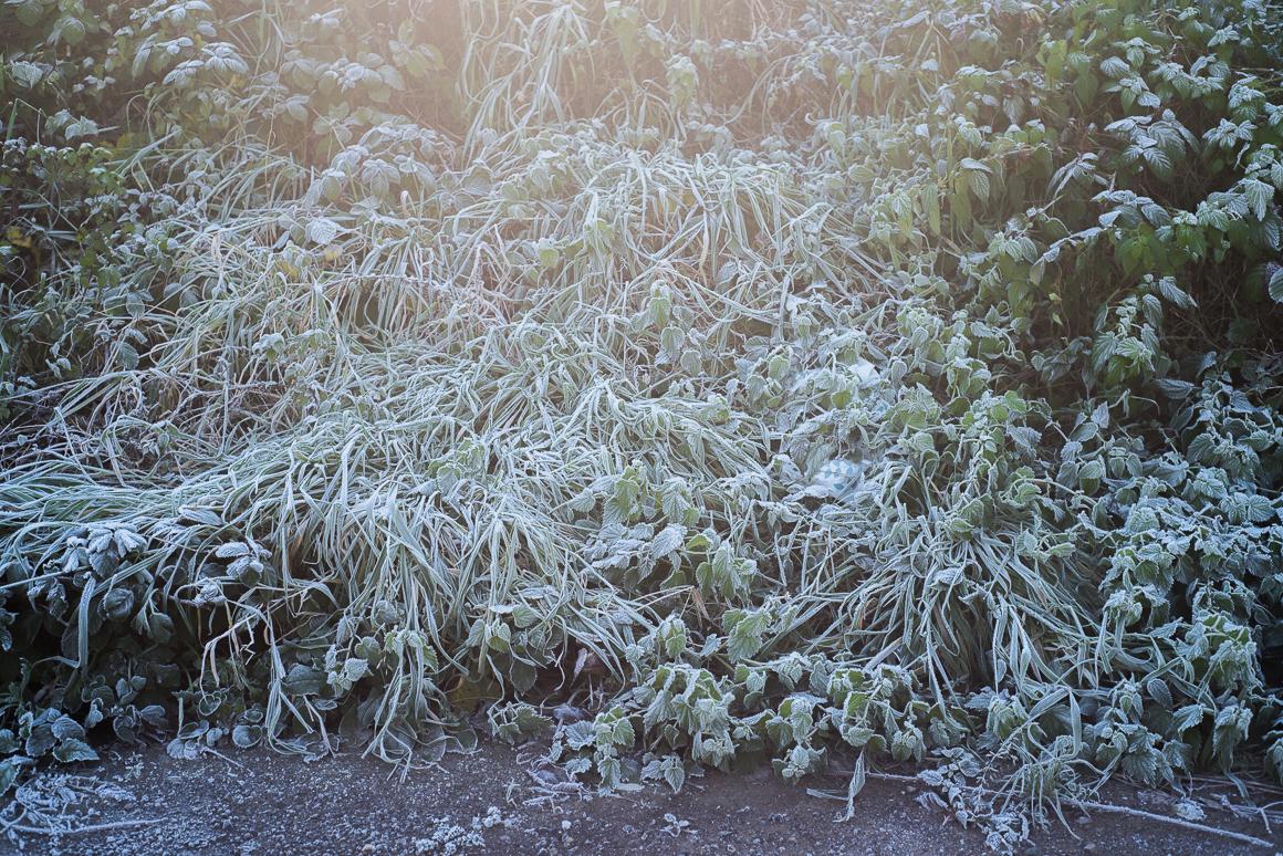 005-frosty