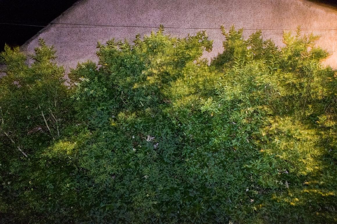 005_plants