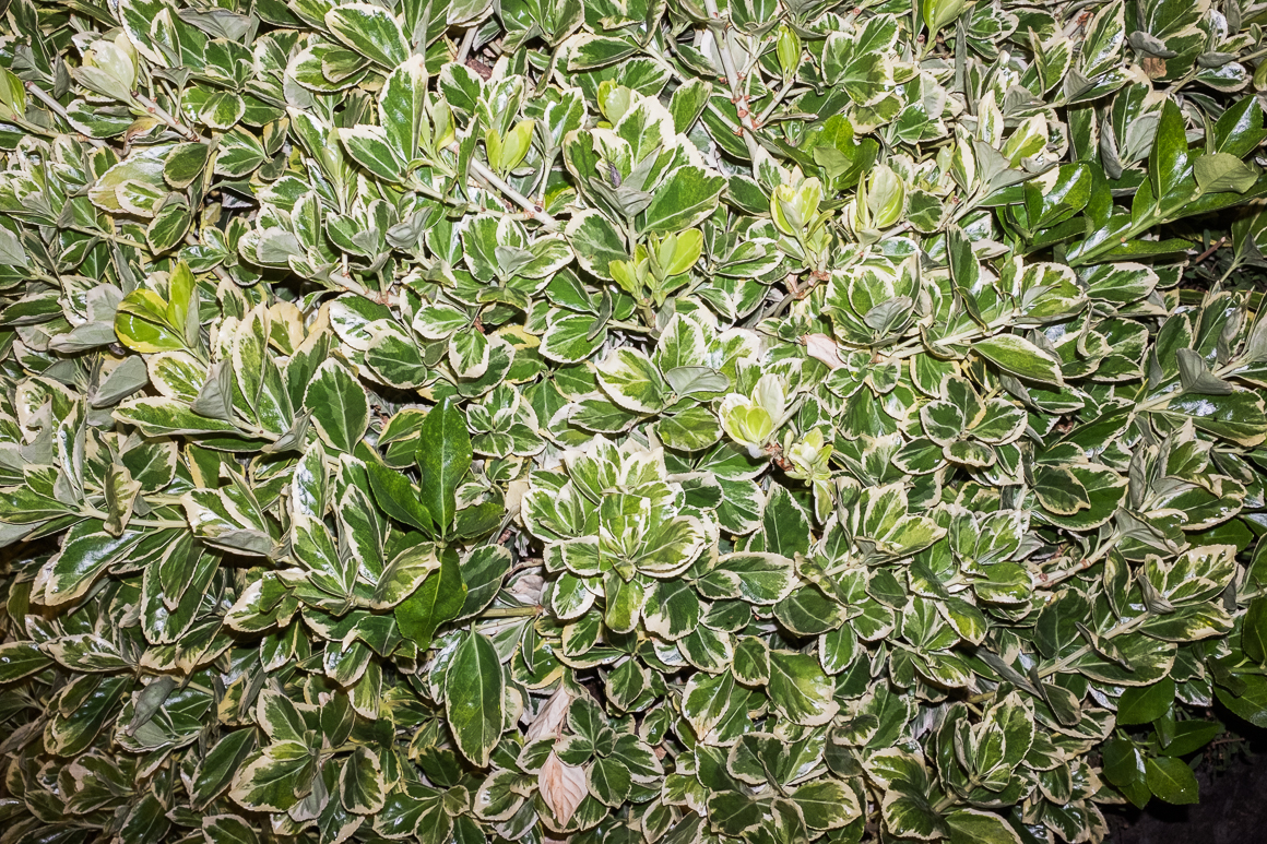 012_plants